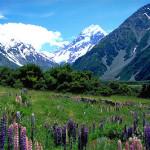 Currency Analysis – New Zealand Dollar versus US Dollar (Video)